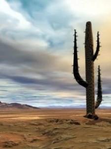 kaktus-240x320.jpg